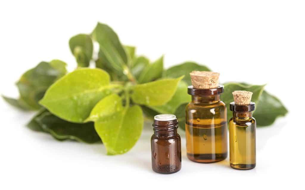Olio essenziale di Ravintsara Aromatica ad alta azione anti-settica.